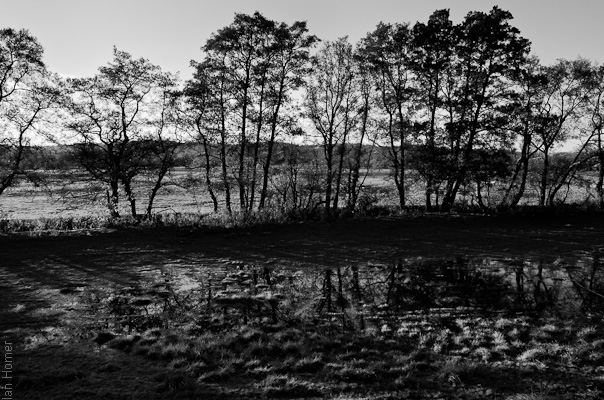 Trees and their reflections in flooded fields i Wale